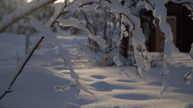 stockvideo's en b-roll-footage met snowy branches in the sunlight / jukkasjarvi, sweden - winter