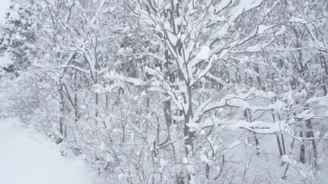 snowy day - 秋田県点の映像素材/bロール