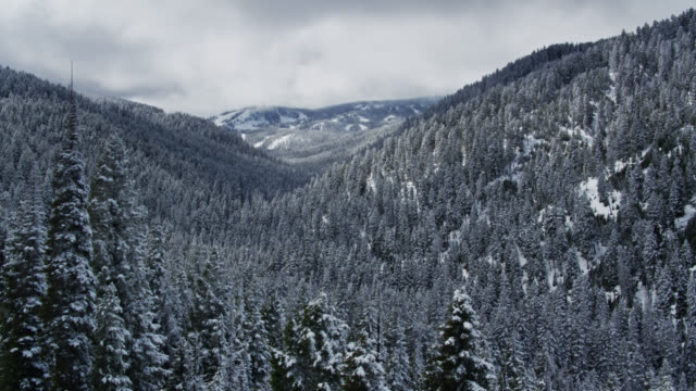 snowy forest high in rocky mountains - drohne - montana stock-videos und b-roll-filmmaterial