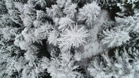 snowy forest in winter, dolomites, italy - snowing stock videos & royalty-free footage
