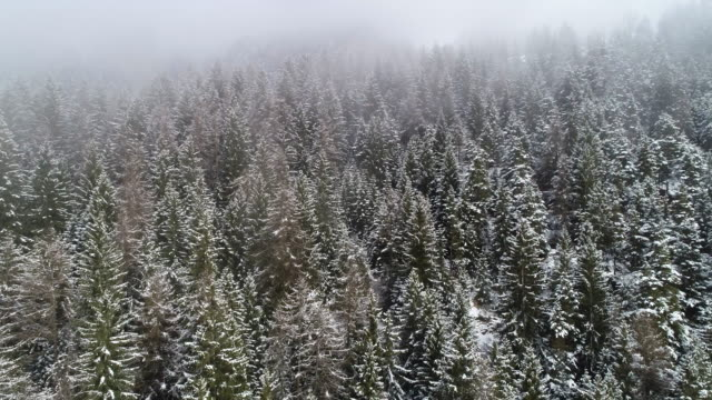 snowy forest in winter, dolomites, italy - trentino alto adige stock videos & royalty-free footage