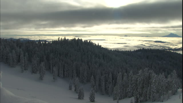 Snowy forests cover the slopes of Mt. Ashland, Oregon.