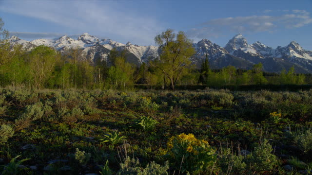 long wide pan snowy grand teton and teton range with scrubby plain and tress in foreground, grand teton national park, wyoming - grand teton stock-videos und b-roll-filmmaterial