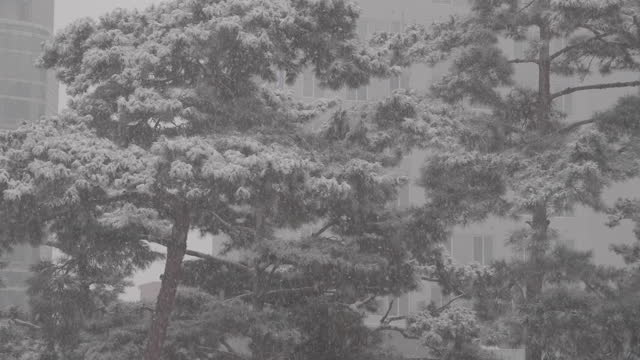snowy landscape with pine tree and building / south korea - 韓国点の映像素材/bロール