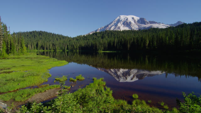 vídeos de stock, filmes e b-roll de wide pan snowy mount rainier and pine forest with insects flying over reflection in pond in foreground - reflection