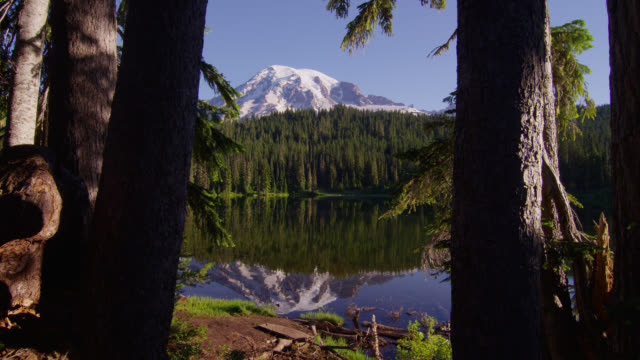 vídeos de stock, filmes e b-roll de wide shot snowy mount rainier and pine forest with reflection in pond in foreground - reflection