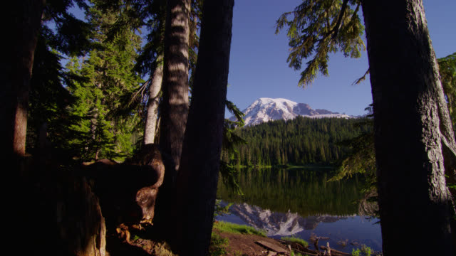vídeos de stock, filmes e b-roll de wide pan snowy mount rainier and pine forest with reflection in pond in foreground - forma da água