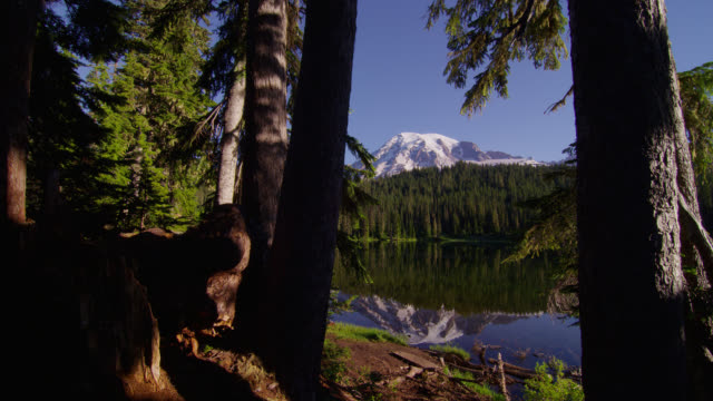 vídeos de stock e filmes b-roll de wide pan snowy mount rainier and pine forest with reflection in pond in foreground - reflection