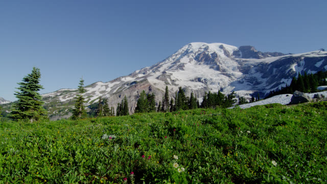 wide pan snowy mount rainier with green meadow in foreground - mt rainier national park stock videos & royalty-free footage