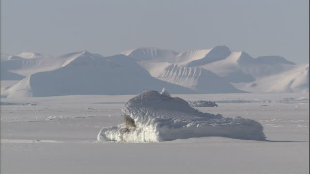 a snowy mountain range is positioned at the edge of an ice field. - svalbard and jan mayen stock videos & royalty-free footage