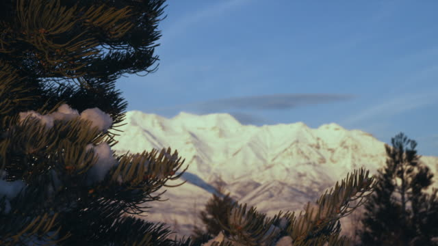 WS R/F Snowy mountains with pine tree in foreground, Orem, Utah, USA
