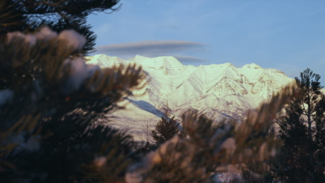 WS Snowy mountains with pine tree in foreground, Orem, Utah, USA