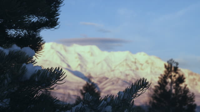 ws r/f snowy mountains with pine tree in foreground, orem, utah, usa - orem video stock e b–roll