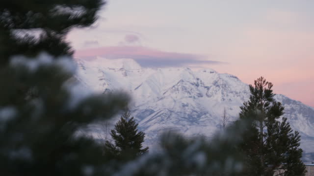 vidéos et rushes de ws r/f cu snowy mountains with pine tree in foreground, orem, utah, usa - orem