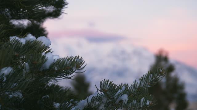 cu r/f ws snowy mountains with pine tree in foreground, orem, utah, usa - orem utah stock videos & royalty-free footage