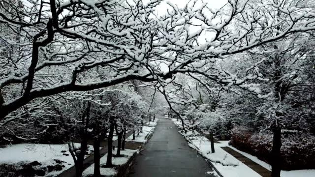 vídeos de stock e filmes b-roll de snowy residential avenue - neve profunda
