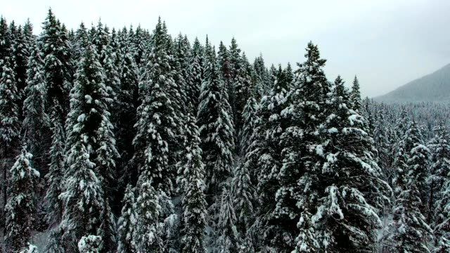 snowy river landscape - coniferous tree stock videos and b-roll footage