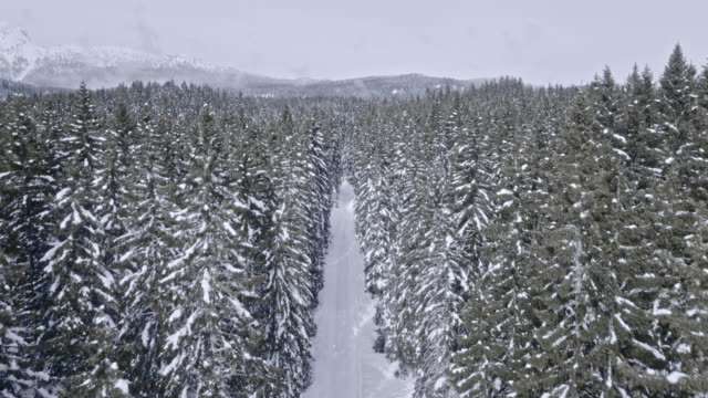 AERIAL Snowy road surrounded by spruce forest