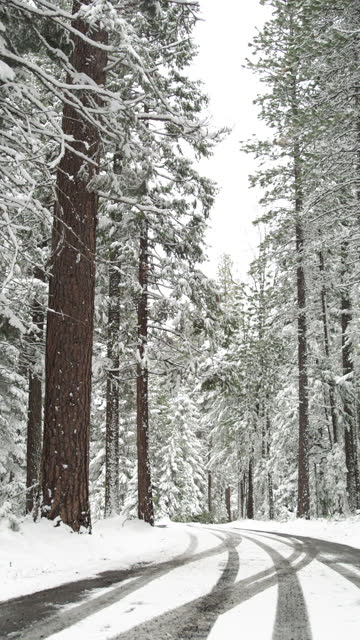 snowy road through forest - vertical stock videos & royalty-free footage