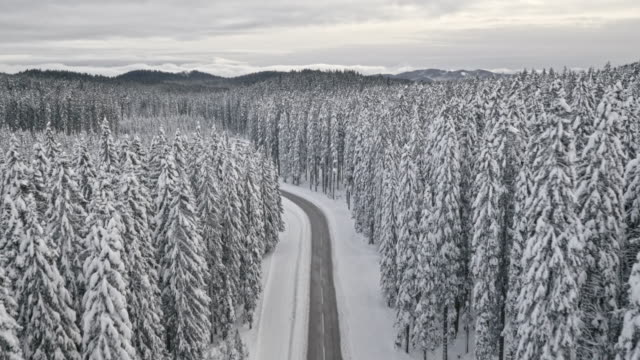 AERIAL Snowy road through winter spruce tree forest