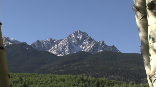 A snowy, rugged mountain peak overlooks a dense forest and an Aspen grove.