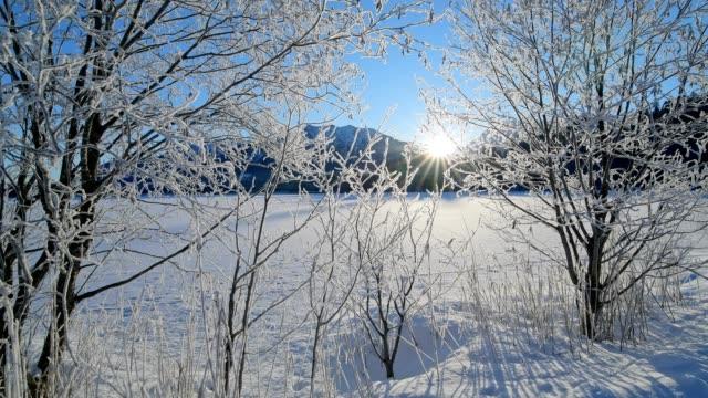 snowy shrub at the frozen lake barmsee in the morning with sun in winter, krün, garmisch-partenkirchen upper bavaria, bavaria, germany, european alps - krün stock videos and b-roll footage