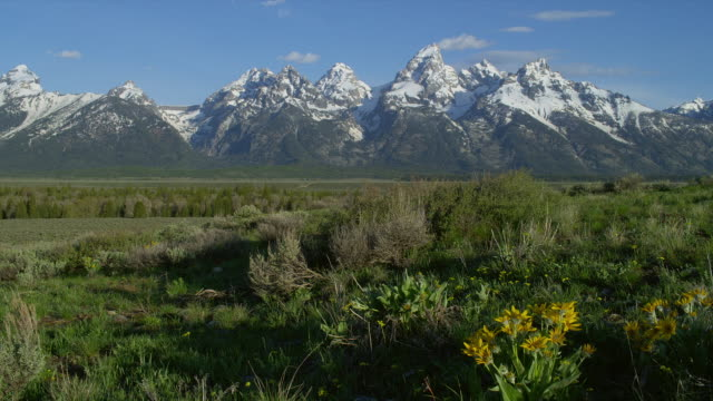 wide pan snowy teton range with grassy plain and yellow daisies in foreground, grand teton national park, wyoming - grand teton stock videos & royalty-free footage