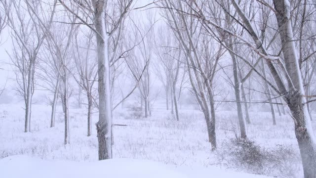 Snowy trees and landscape at snowstorm