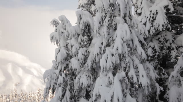 snowy trees and mountains, lost lake trail, chugach national forest, alaska. - chugach national forest stock videos & royalty-free footage