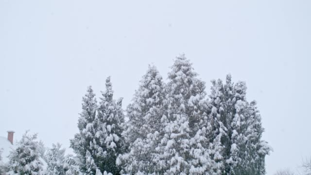 snowy trees and winter rooftop, super slow motion - winter stock videos & royalty-free footage