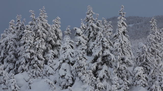 snowy trees, chugach national forest, alaska. - chugach national forest stock videos & royalty-free footage