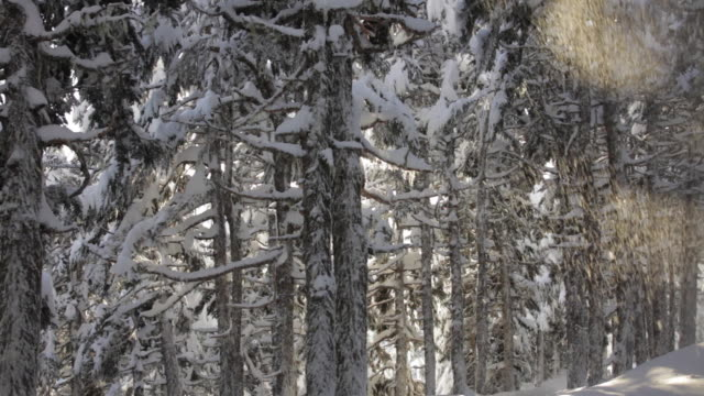snowy trees, lost lake trail, chugach national forest, alaska. - chugach national forest stock videos & royalty-free footage