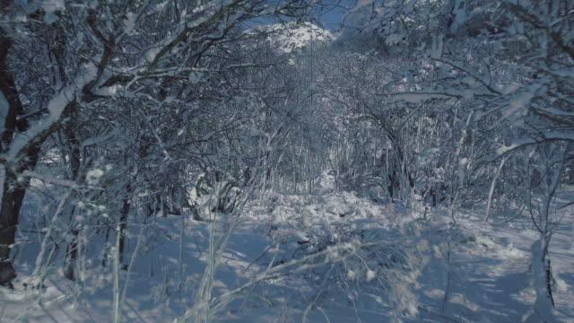 snowy trees - snow cornice stock videos and b-roll footage