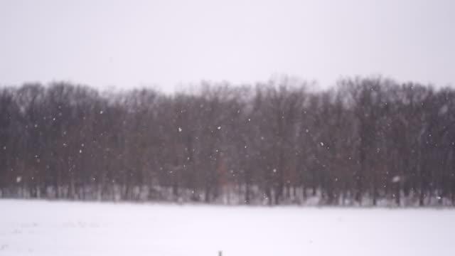 vídeos de stock, filmes e b-roll de fundo de inverno neve - chuva congelada
