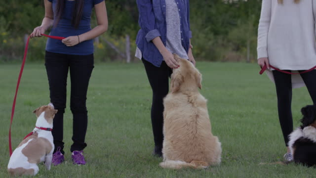 so many friends in obedience class - group of animals stock videos & royalty-free footage
