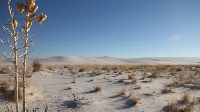 soaptree yucca plant, white sands nat'l mon. - new mexico stock videos & royalty-free footage