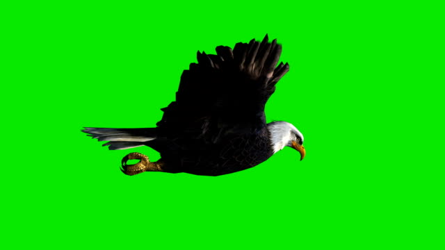 soaring eagle green screen (loopable) - eagle bird stock videos and b-roll footage