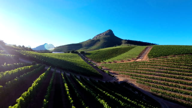 Soaring over vineyards