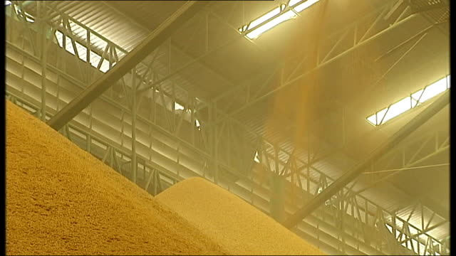 threat to Asian countries India and Thailand Lorry reversing / huge pile of rice in warehouse as man cycles past / grain mountains in warehouse /...