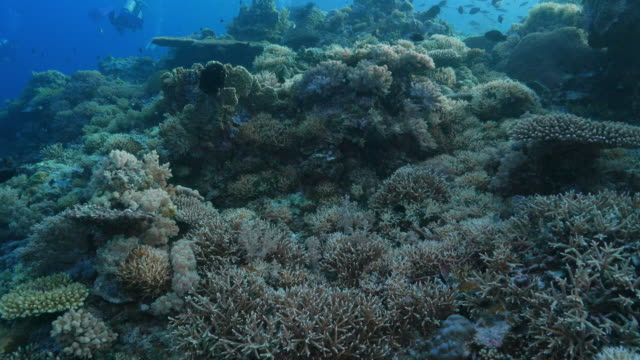 soft and hard coral formation undersea, apo reef, philippines - soft coral stock videos & royalty-free footage