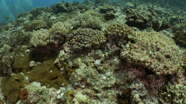 soft coral colony at tropical undersea reef, taiwan - scuba diver point of view stock videos & royalty-free footage