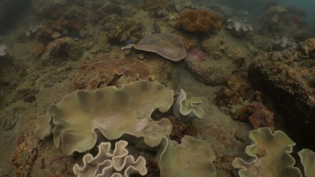 soft coral colony on undersea rocky reef at taiwan - soft coral stock videos & royalty-free footage