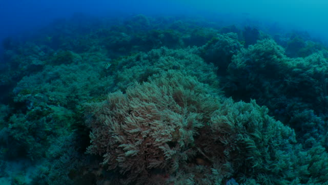 soft coral grassland colony undersea - soft coral stock videos & royalty-free footage