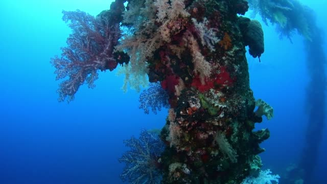 soft coral on sankisan maru, underwater wrecks, truk lagoon, chuuk micronesia - 1944 stock videos & royalty-free footage