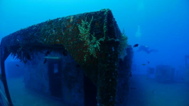 vídeos de stock, filmes e b-roll de corais moles em recife artificial de naufrágio - deep sea diving