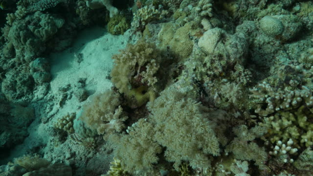 soft coral undersea, philippines (4k) - soft coral stock videos & royalty-free footage