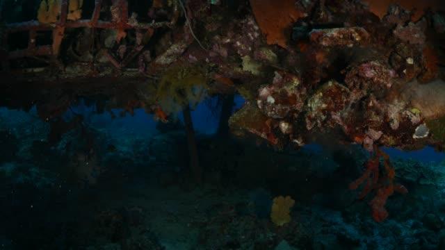 Zachte koraal onderzeese watervliegtuig wrak
