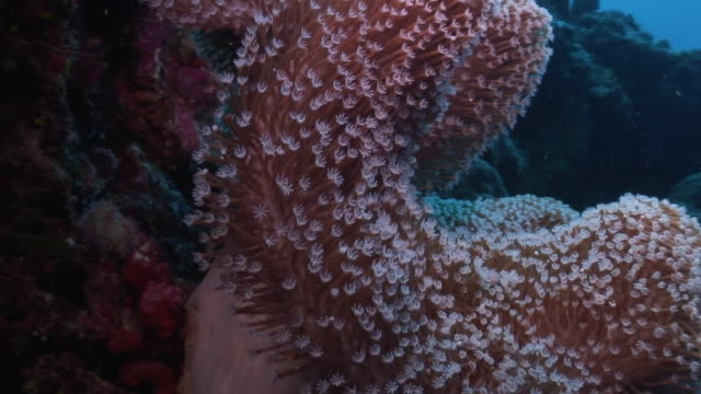 soft coral - soft coral stock videos & royalty-free footage