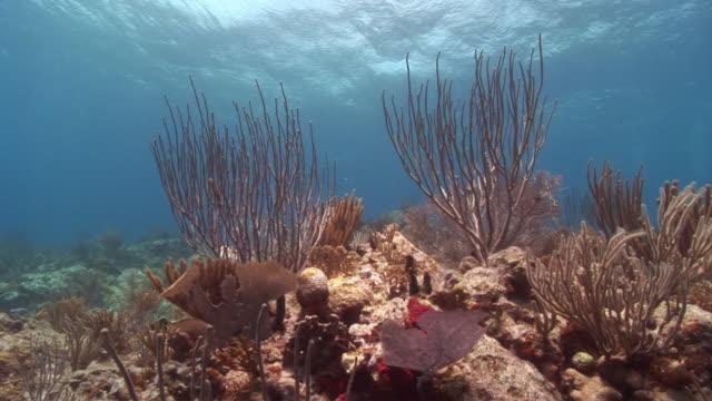 MS, Soft corals in ocean floor, Peter Island, British Virgin Islands, United Kingdom