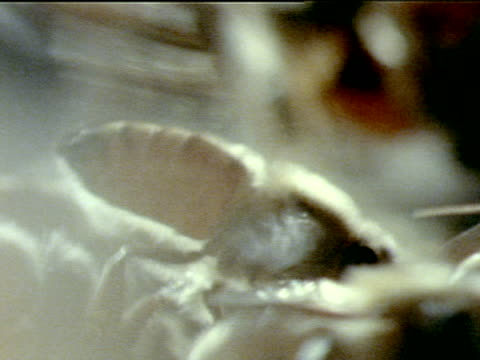 vídeos de stock, filmes e b-roll de soft focus la xcu honey bee standing in profile rapidly fanning wings cooling w/ other bees walking clustering around xcu two honey bees mouth to... - abelha obreira